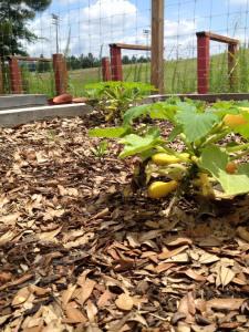 West Campus Garden Vegetables